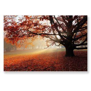 Wandbild Modern Morgenlicht Herbstszene ohne Rahme im Schlafzimmer